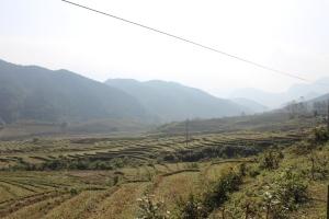 Les rizières en terrasses.