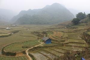 Une maison dans les rizières.